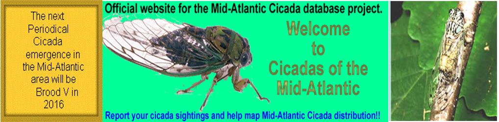 Cicadas.info